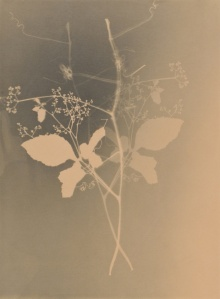 joao Penalva - Weeds of Hiroshima, 1997