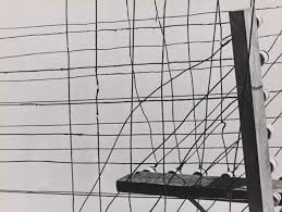 Geraldo de Barros -Untitled (telegraph wires) c.1950s