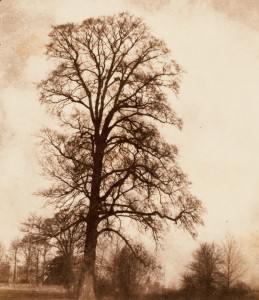 Talbot the great elm at lacock 1843-45